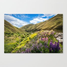 Lupines fields on the side of the road in New Zealand Canvas Print