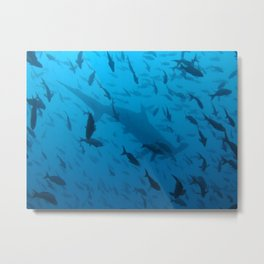 Hammerhead silhouette (with fish) Metal Print