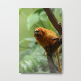 Orange Monkey Photography Print Metal Print