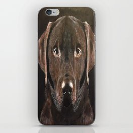 Classic Chocolate Labrador iPhone Skin