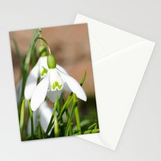 Snowdrop macro Stationery Cards