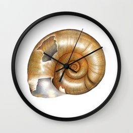The Great Ramshorn (Planorbarius corneus) Wall Clock