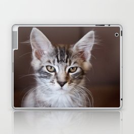 Kitten portrait 2596 Laptop & iPad Skin