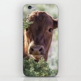 Shy Calf iPhone Skin