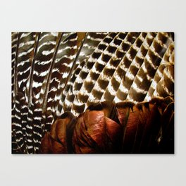 Turkey Wing Feathers Canvas Print