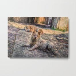 Two dogs resting Metal Print