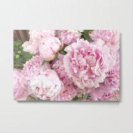 Pink Shabby Chic Peonies - Garden Peony Flowers Wall Prints Home Decor Metal Print