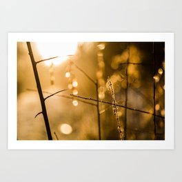 Warm Winter Light Art Print