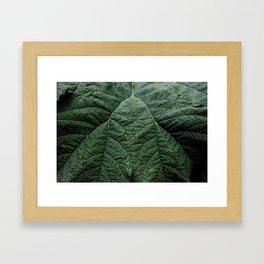 Gunnera Manicata Framed Art Print