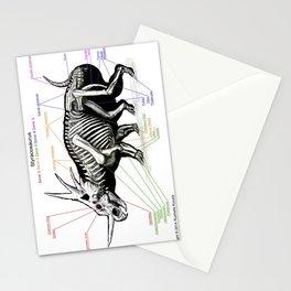 Styracosaurus Skeleton Study Stationery Cards