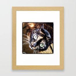 Pewee No.1 Framed Art Print