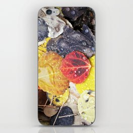 Multicolored Aspen Leaves in Woods iPhone Skin
