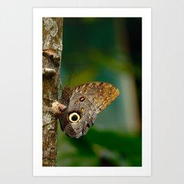 Butterfly eye of owl (Caligo eurilochus) Art Print