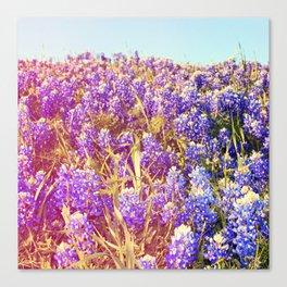 Bluebonnets! Canvas Print