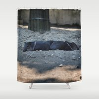 pigs Shower Curtains featuring Little pigs by DB.Photography