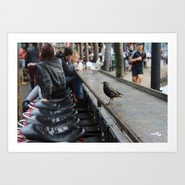 Candem bird Art Print