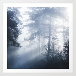 Sun rays shinning through foggy forest Art Print