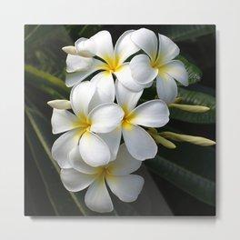 Tropical Hawaiian Island Plumeria Flowers Metal Print