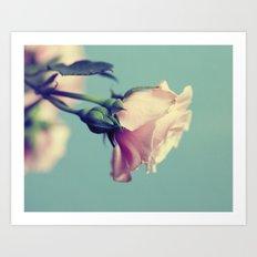 The Pink Rose Art Print