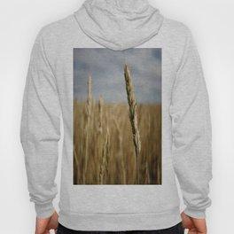 Wheat Field  Hoody