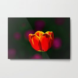 Red tulip flower Metal Print