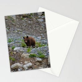 Black bear cub in Jasper National Park | Alberta Stationery Cards