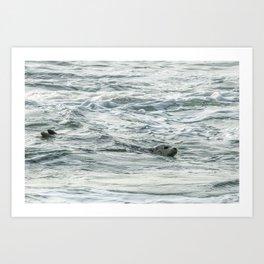 Harbor Seal, No. 2 Art Print