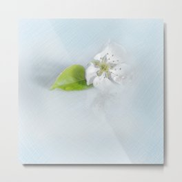 On the table lay the flower of a wild pear ... Metal Print