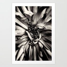 Dahlie Art Print