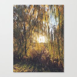 Leaning Weeping Willows at Sunset Canvas Print