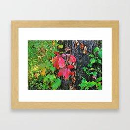 Changing Lanes Framed Art Print
