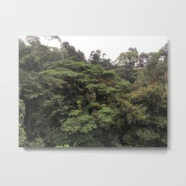 Tree Canopy 2 Metal Print