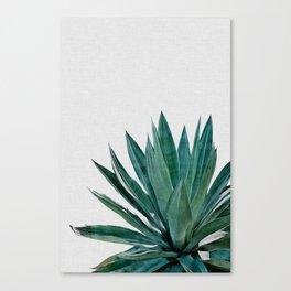 Agave Cactus Canvas Print