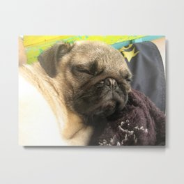 Cute Pug Sleeping - hard day at the beach Metal Print