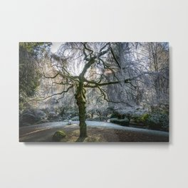 Frost in Tipperary Park Metal Print