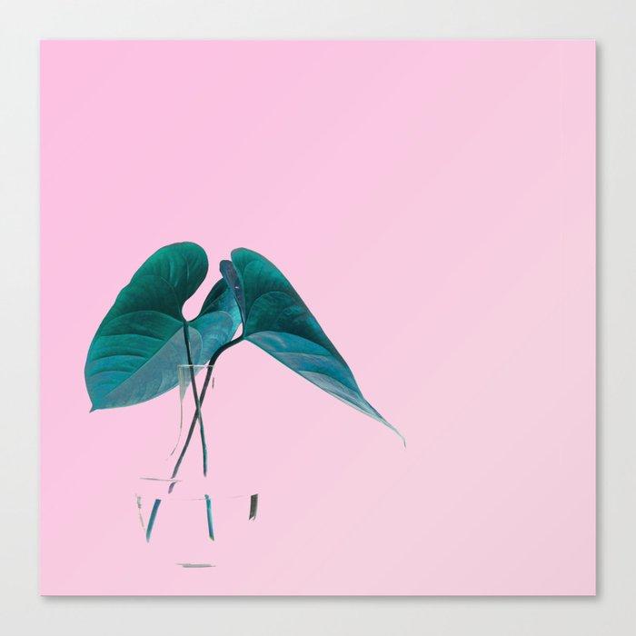 Pink Plant Canvas Print