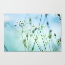 summer sun (green grass) Canvas Print