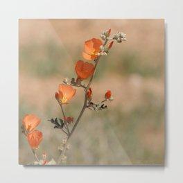 Desert Wildflower - 1 Metal Print