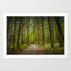 Dirt Road through a Rain Forest on Vancouver Island in British Columbia Canada No.1178 A Fine Art Wi Art Print
