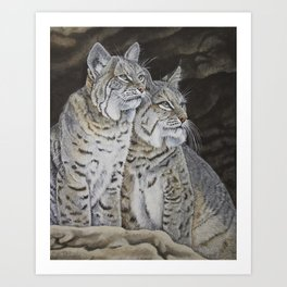 Bird Gazing-Bobcats Art Print