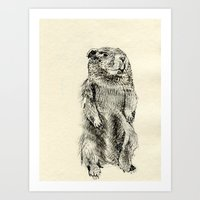 beaver Art Prints featuring Beaver by Amy Veried