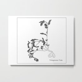 Pelargonium triste sketch Metal Print