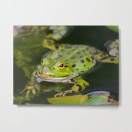 Green European Frog Metal Print