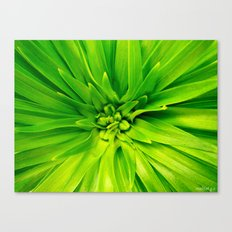 Lily's heart Canvas Print