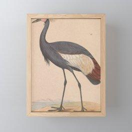 Vintage Print - A History of the Birds of Europe (1859) - Balearic Crane Framed Mini Art Print