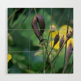 slug dancing on a poppy Wood Wall Art