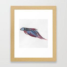 A Little Betta Framed Art Print