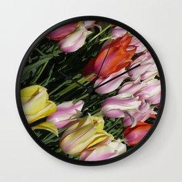 Field of Rainbow Tulips in Albany, NY Wall Clock