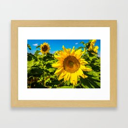 Here Comes the Sun - Giant Sunflower on Sunny Day in Kansas Framed Art Print