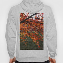 Red Maple Hoody